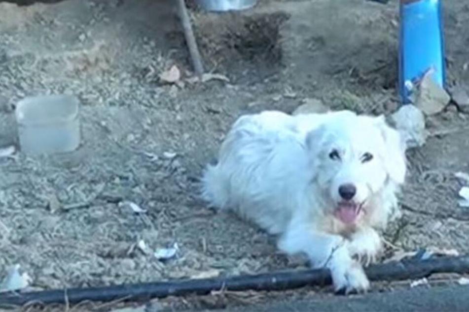 Der Hund ohne Namen wartet noch immer auf sein verstorbenes Herrchen.