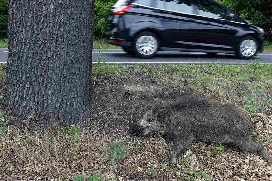Rehe und Wildschweine waren an den meisten Unfällen beteiligt. (Symbolbild)