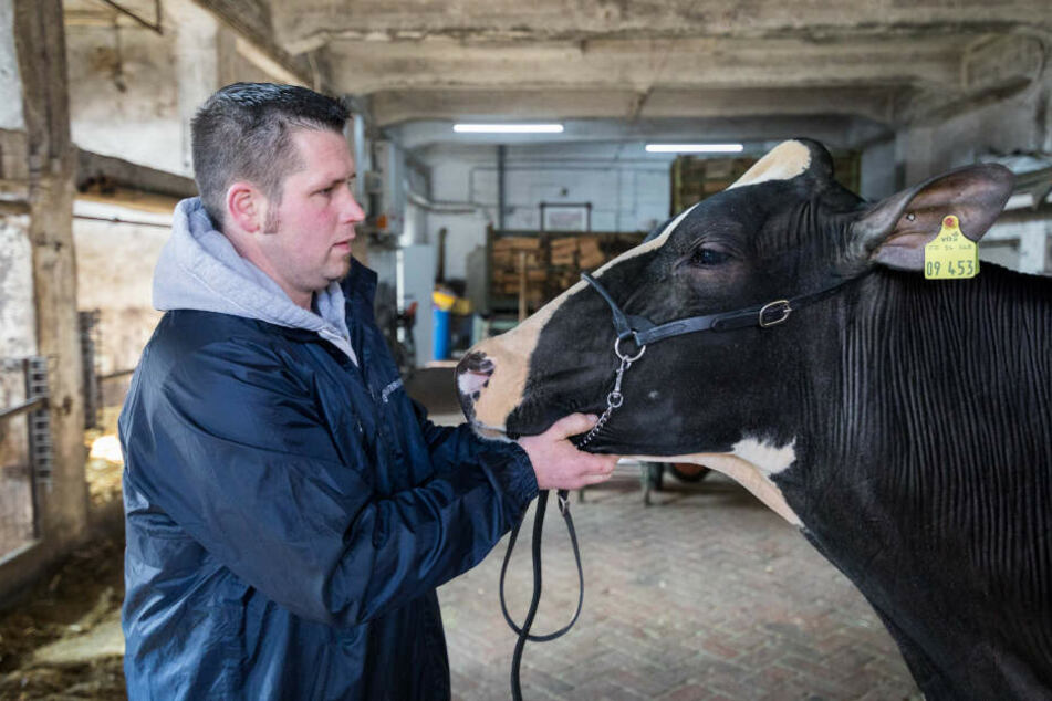 Besitzer und Kuh stehen sich gegenüber.