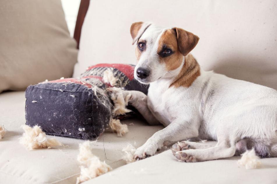 Spätestens wenn Bello die Couch zerlegt, muss gehandelt werden.