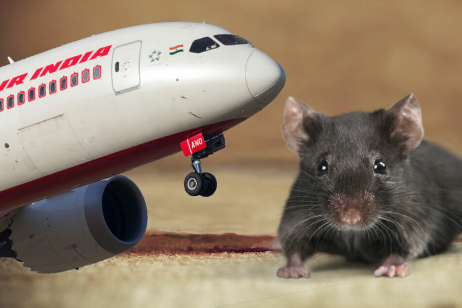 Wegen einer Ratte an Bord konnte ein Flugzeug von Air India stundenlang nicht starten.