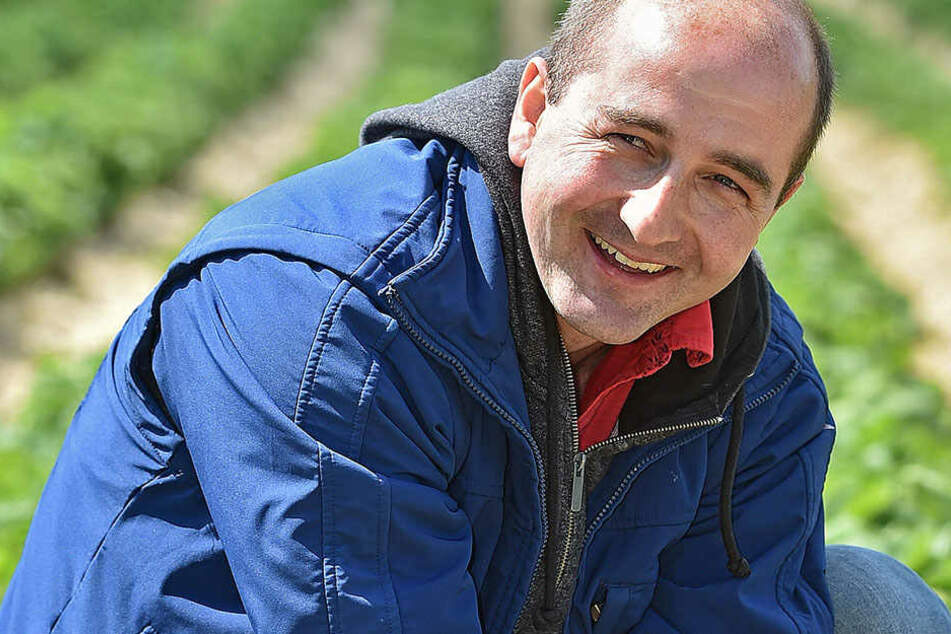 Obstbauer Robert Rüdiger (35) freut sich auf die Erdbeer-Ernte, doch noch sind die Früchte grün - werden erst Ende Mai pflückreif sein.