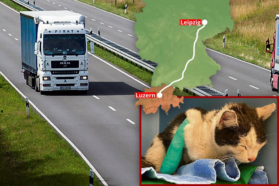 Als blinder Passagier auf dem Laster! Sachsen-Katze trampt 700 Kilometer in die Schweiz