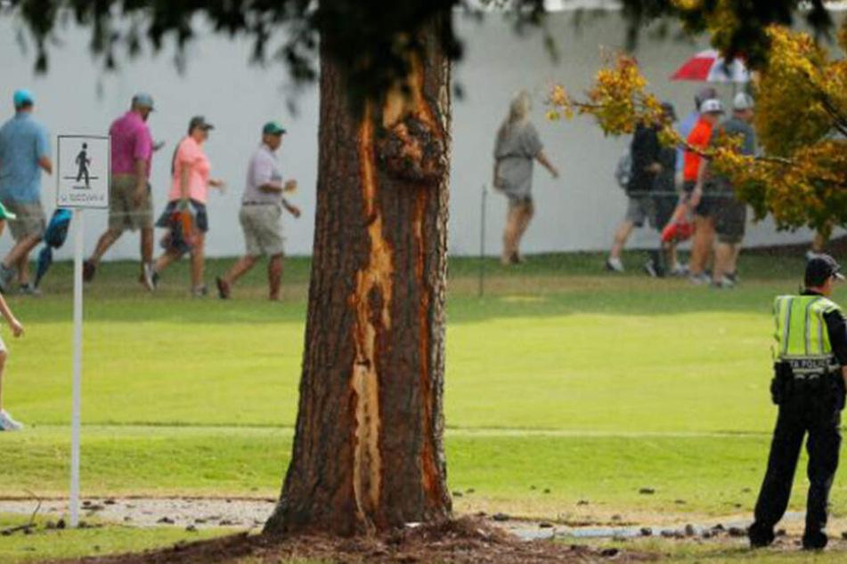 Der getroffenen Baum in der Nähe des 16. Abschlags.