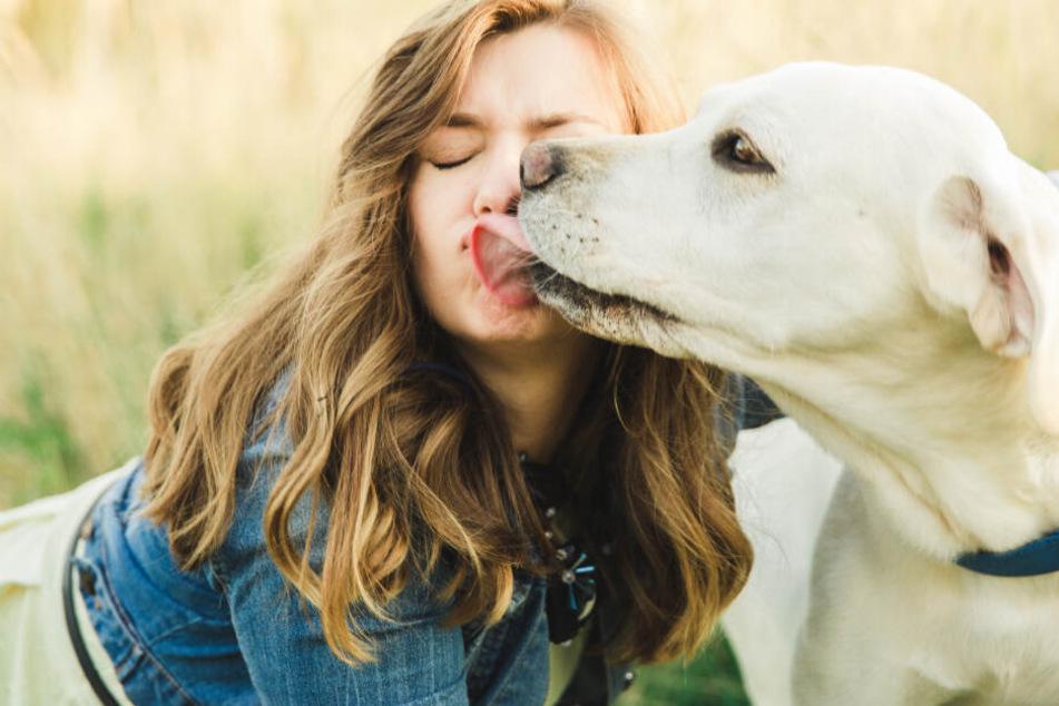 Hunde-Sabber-Attacke: Deshalb solltest Du das Abschlecken nicht verbieten