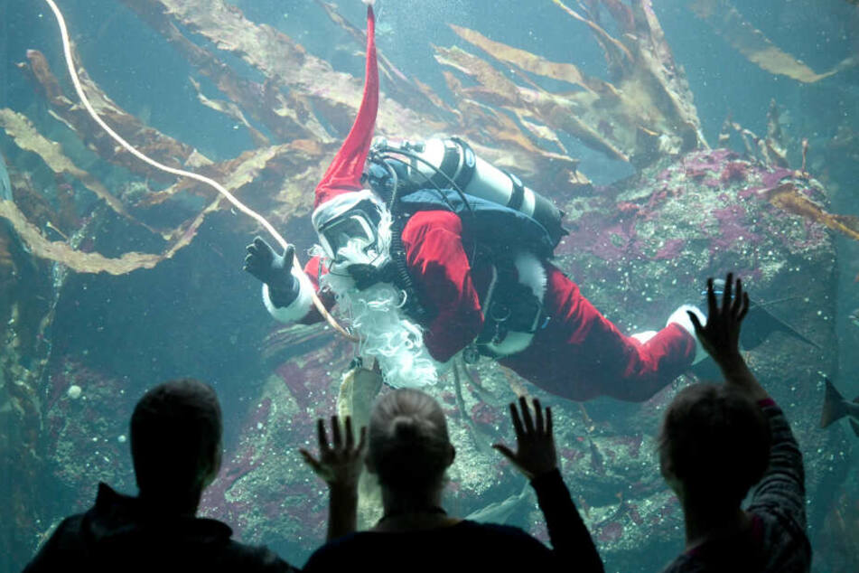 Huch! Wieso schwimmt denn da ein Nikolaus durchs Aquarium?