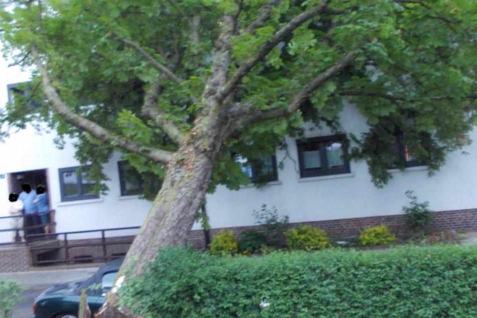 Noch in der Nacht konnte die Feuerwehr den Baum zersägen und abtransportieren.