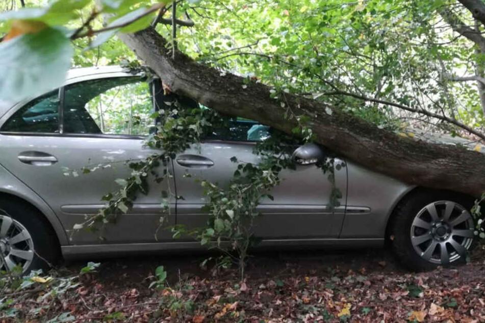 Nach der Kollision krachte der Wagen gegen einen Baum.