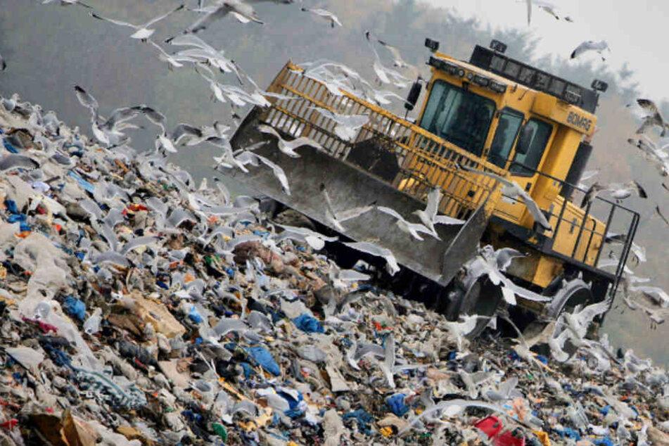 Verseucht versickerndes Gift aus Mülldeponie das Trinkwasser?