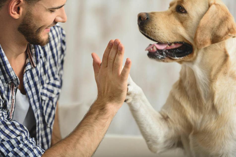Hunde können keine Zuneigung vortäuschen - zum Glück!