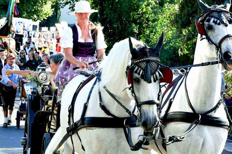 Über das Wochenende fand in Thüringen eine Pferdemarkt auf dem Buttstädter Roßplatz statt.