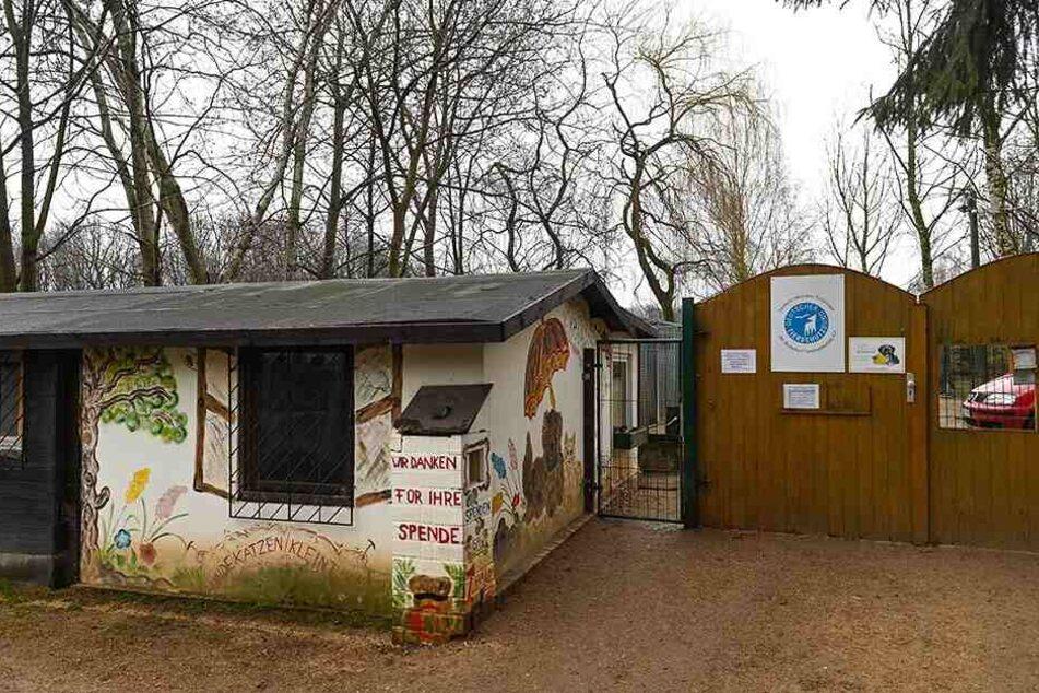 Seit 1994 bietet das Tierheim Görlitz Obhut für Fellnasen und Co.