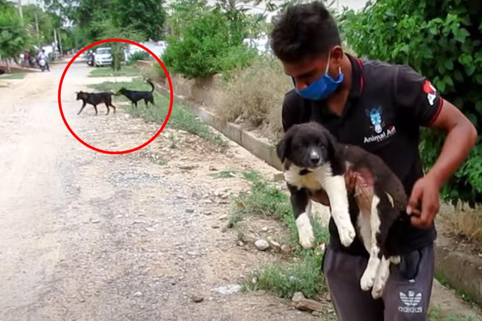 Die Tierschützer retteten diesen kleinen Hund und realisierten auch die anderen Vierbeiner im Hintergrund - dachten sich jedoch nichts dabei.
