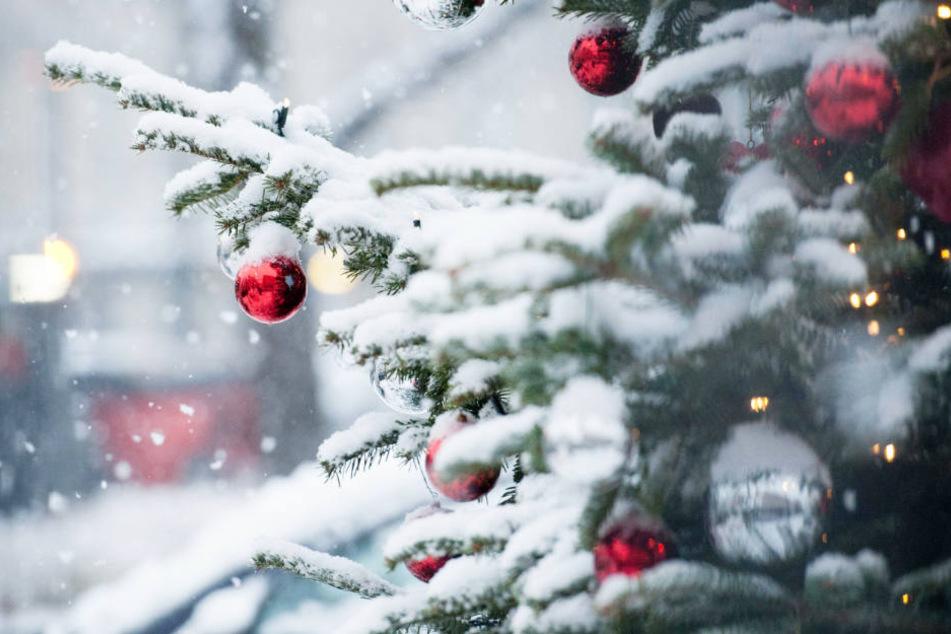Ein geschmückter Weihnachtsbaum im Schnee: Das wird es dieses Jahr vermutlich in Hamburg nicht geben.