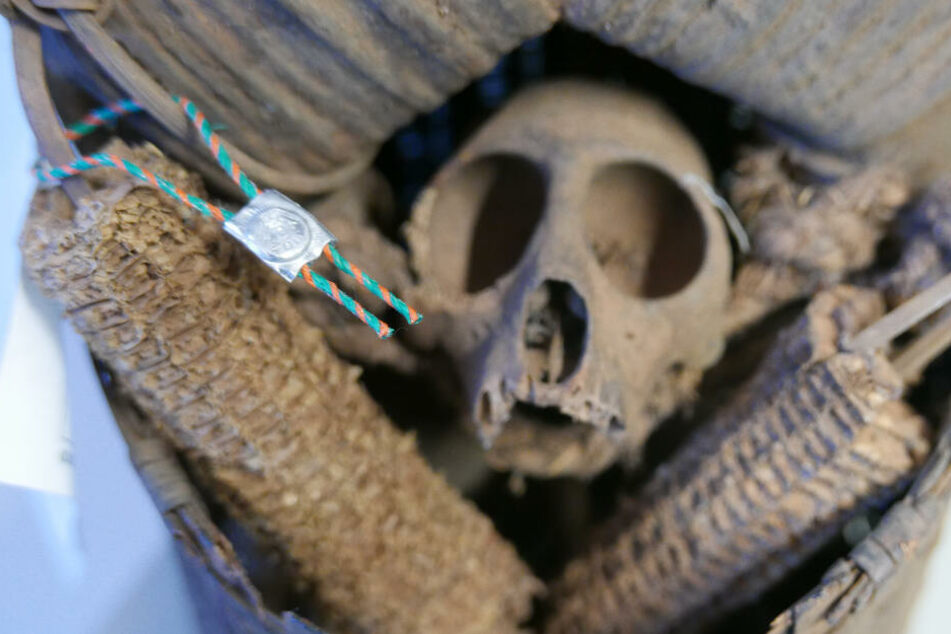 Grusel-Fund beim Zoll: Echter Schädel als Kunstprojekt verschickt