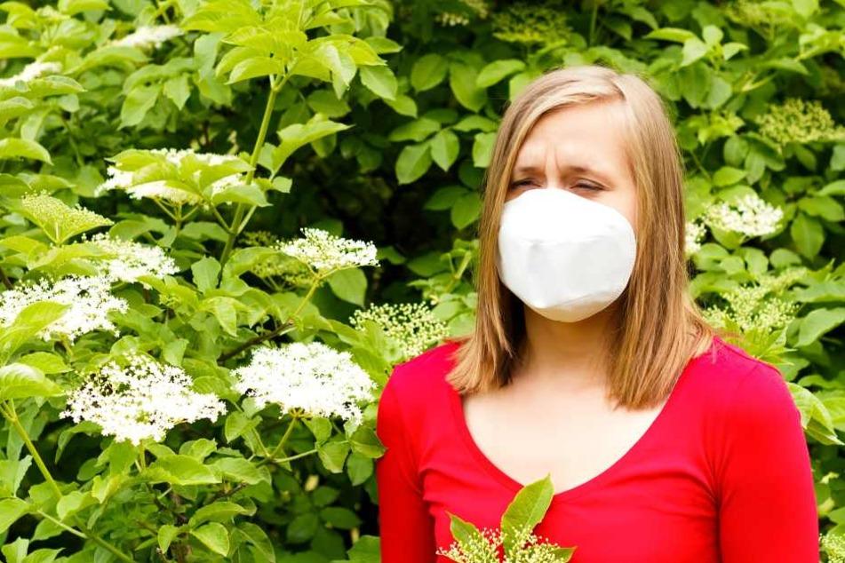 Es kommt in Europa an: 2017 mussten in Großbritannien 8500 Menschen mit Pollen-Schock ins Krankenhaus! Neun starben an Asthmaattacken nach Gewittern!