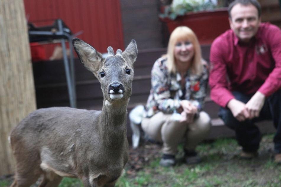 """Anja Pahlen und Peter Göbel (im Hintergrund) zogen Kitz """"Bambi"""" mit der Flasche groß."""