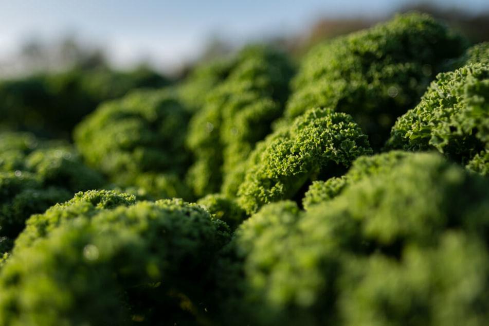 Wer dieser Tage beim Einkauf zum Grünkohl greift, macht schon mal vieles richtig: Das Wintergemüse gilt als äußerst gesund.