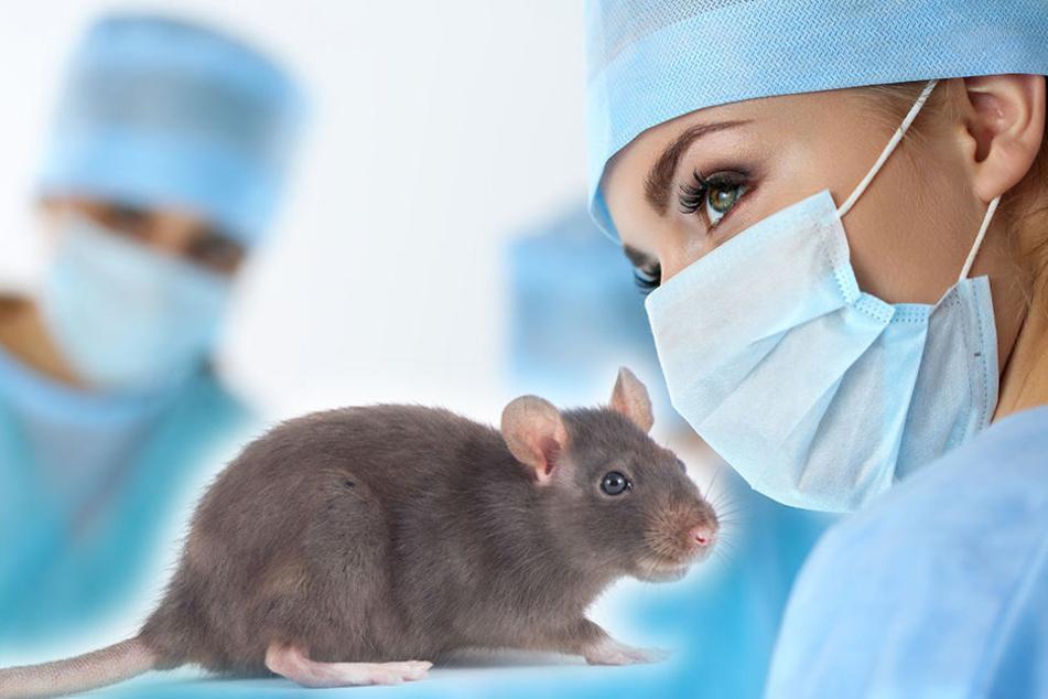 In Münster gibt es jetzt eine Professur zum Thema Tierwohl. (Symbolbild)