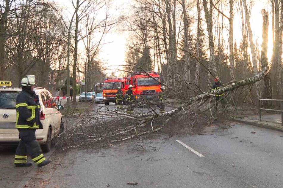 Ein Baum knickte ab und fiel mitten auf die Straße.