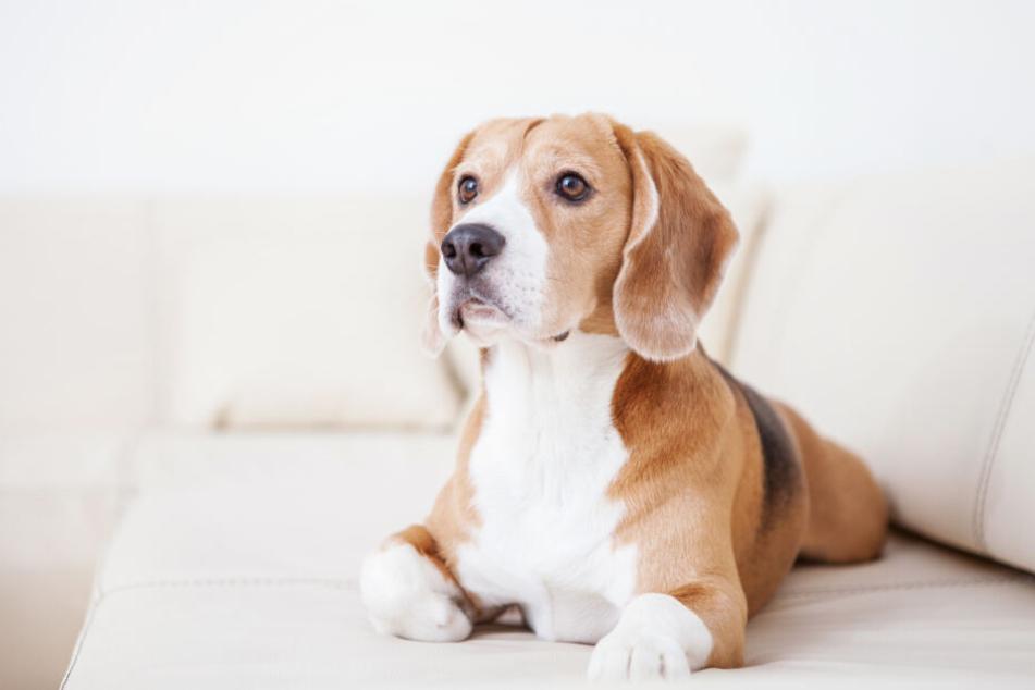 Auslöser des Streits soll der Familienhund gewesen sein. (Symbolbild)