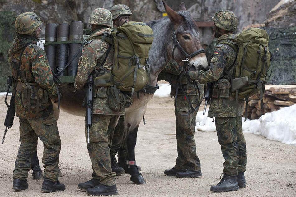 Auch über 27 Pferde und Maultiere wurden zu Versuchszwecken getötet (Symbolbild).