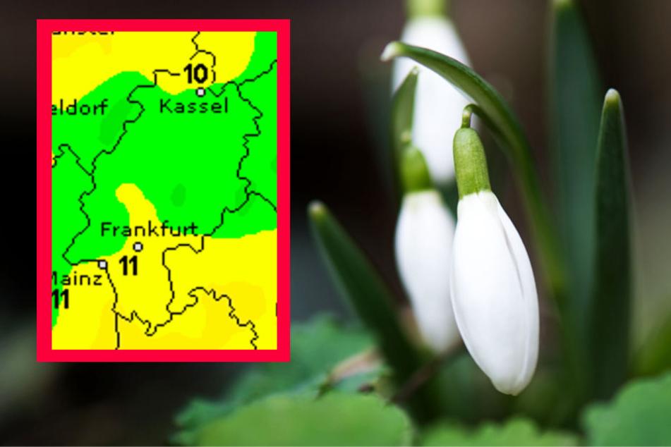Bei Temperaturen von über zehn Grad könnten Frühblüher wie das Schneeglöckchen austreiben (Archivbild).