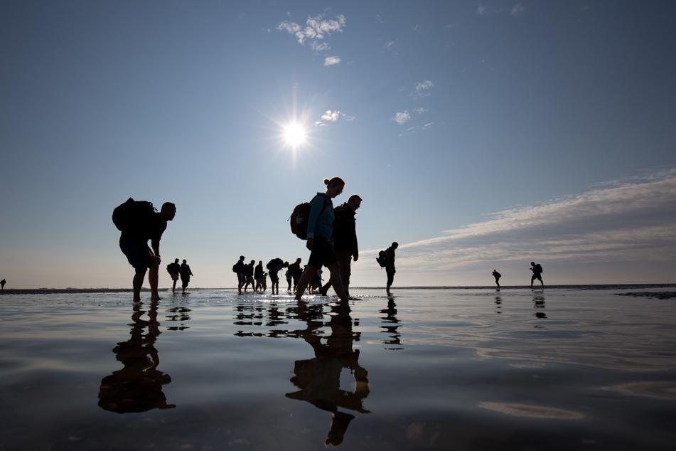 Bei einer gemeinsamen Wattwanderung fand die Gruppe etwas im Sand. (Symbolbild)