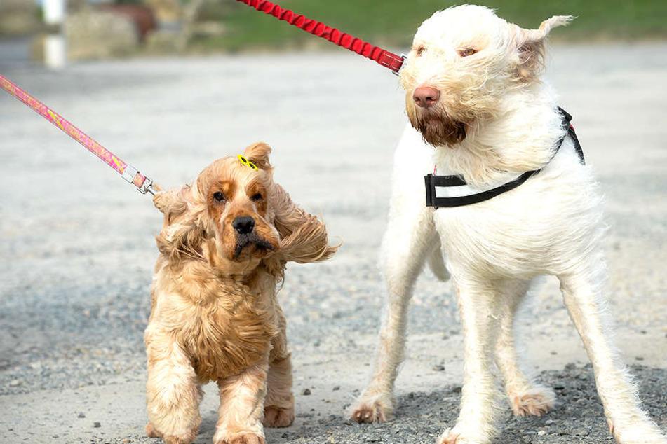 Die Hunde konnten den Wanderern den Weg aus dem Wald hinaus auch nicht zeigen.