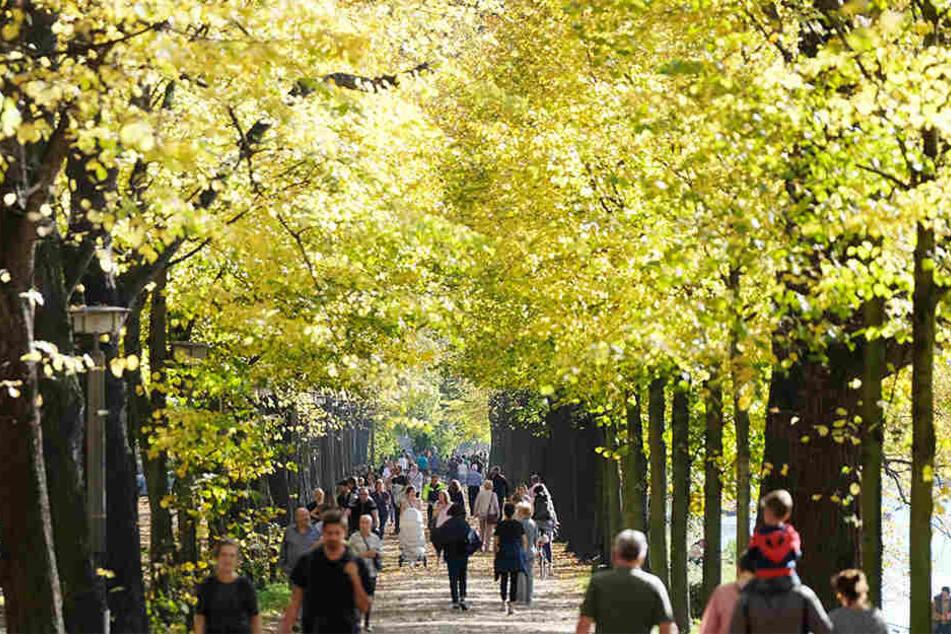 Das Entwicklungskonzept Clara-Zetkin-Park und Johannapark gibt den Rahmen für die Zukunft beider Grünanlagen vor. (Archivbild)