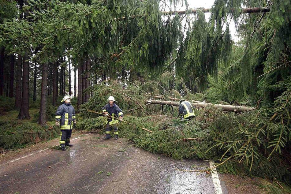 Vor allem wegen umgestürzter Bäume musste die Feuerwehr ausrücken.