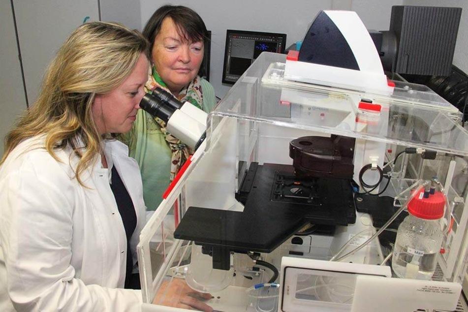 Sylvia Renz (l.) und Tamara Grummt untersuchen im Umweltbundesamt in Bad Elster die Auswirkungen von Mikroplastik am Mikroskop.