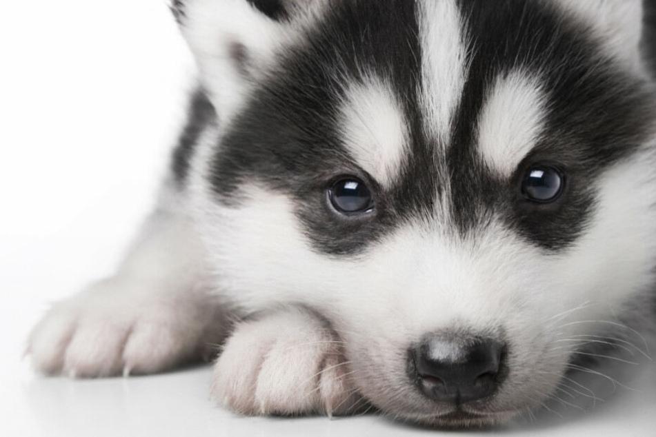 Der kranke Hund wurde zu einem Tierarzt gebracht. (Symbolbild)