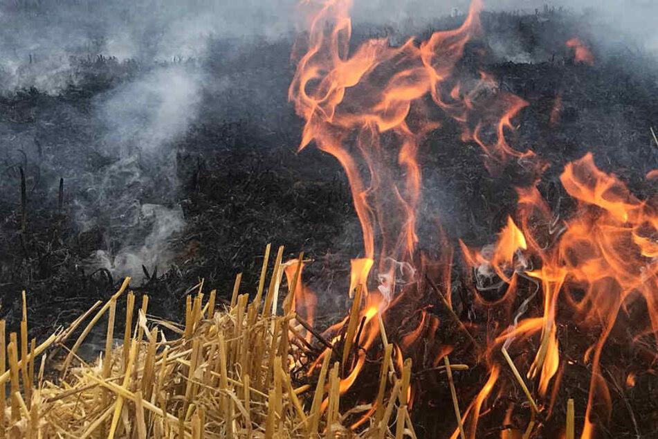 Die Feuerwehr mahnt eindringlich: Wegen der Trockenheit genügt ein Funke, um einen Brand zu verursachen (Symbolbild).