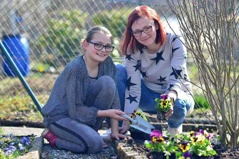 Damit der Garten schön aussieht: Mandy Bollwahn (32) und Tochter Lea (10) pflanzen Stiefmütterchen.