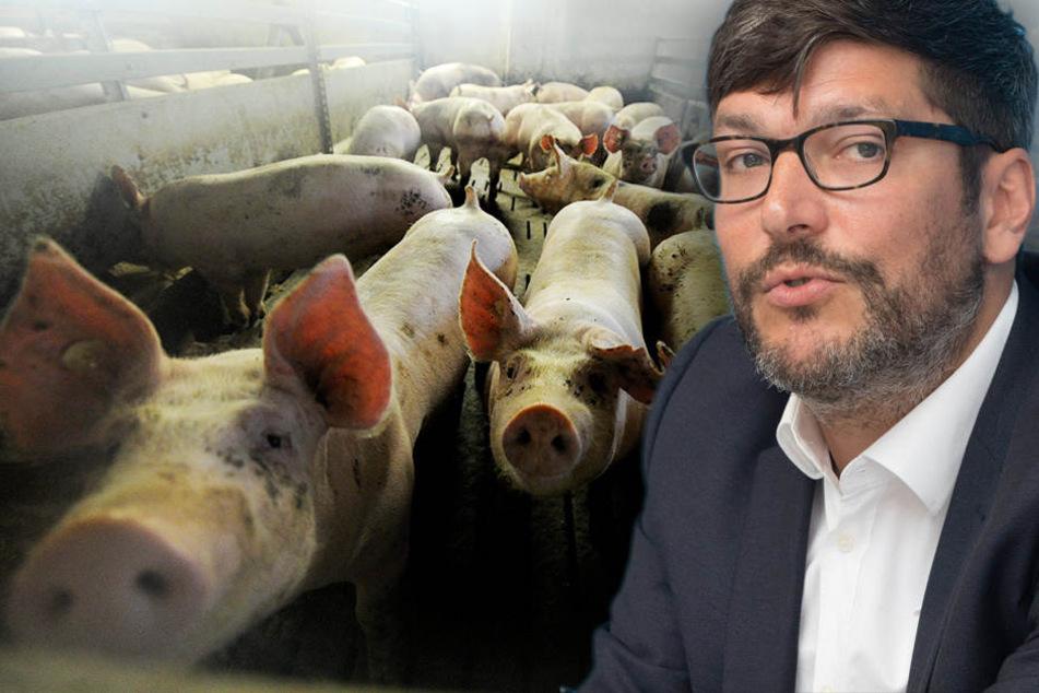 Justizsenator Dirk Behrendt will die Massentierhaltung überprüfen lassen. (Bildmontage)