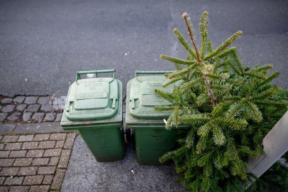 So nicht: Weihnachtsbäume einfach auf die Straße stellen kann teuer werden.
