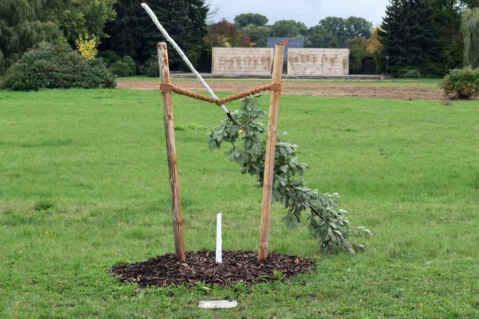 Anfang Oktober wurde der Gedenkbaum in Zwickau abgesägt. Er soll an die NSU-Opfer erinnern.