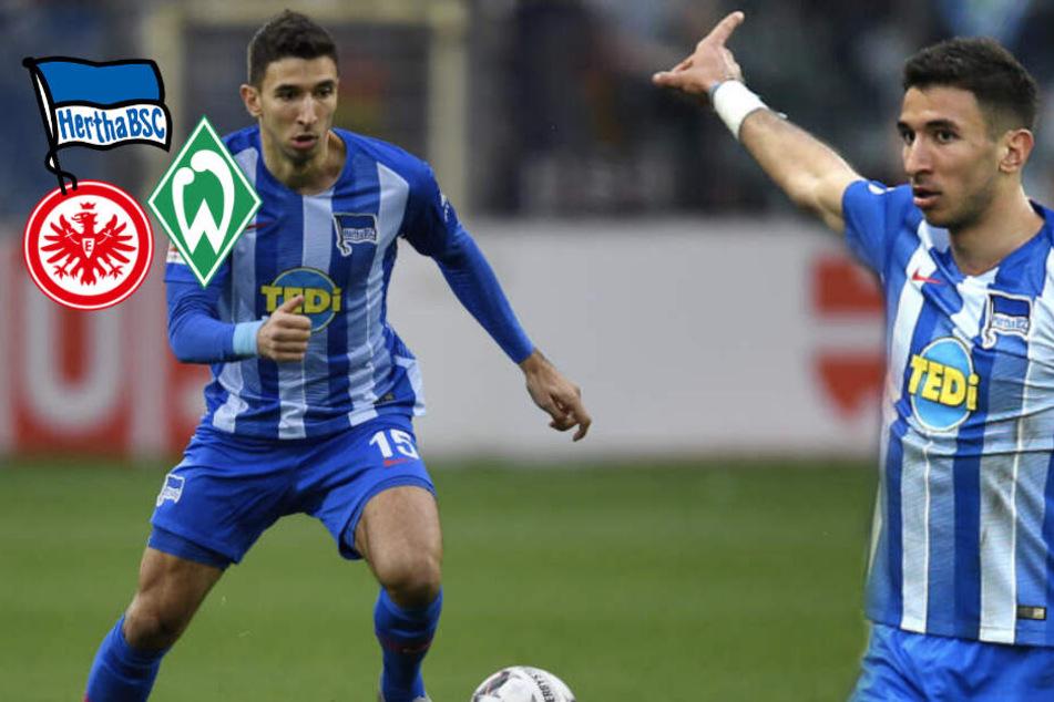 Grujic-Poker vor Vollendung: Werder Bremen, Eintracht oder wieder Hertha?