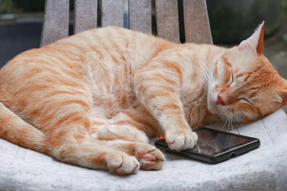 Mann liegt hilflos neben Rollstuhl: Seine Katze wählt den Notruf