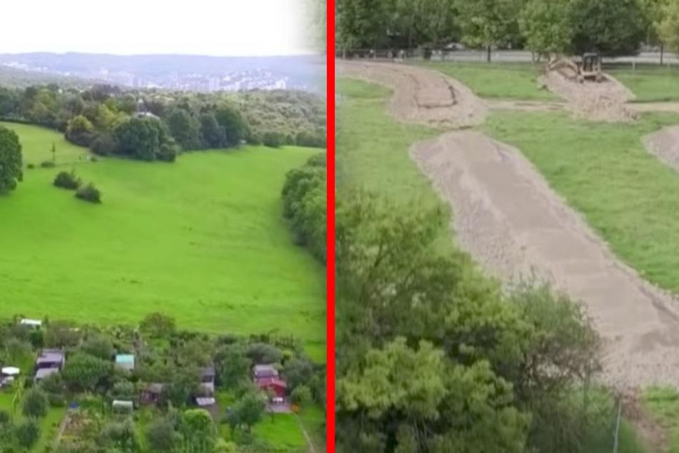 Die Deutsche Bahn baute für die Eidechse mit 14.000 Tonnen Gestein die Wiese um: Die Eidechse zog allerdings lieber in eine benachbarte Siedlung. (Fotomontage)