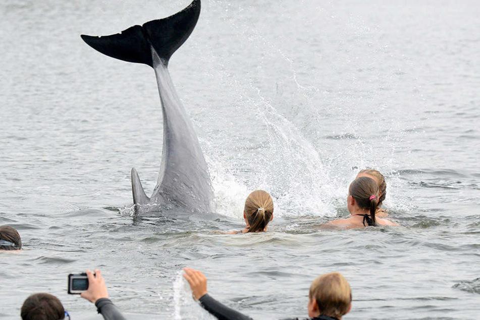 """""""Es ist sehr wahrscheinlich, dass die an den Tieren festgestellten Verletzungen von einem Delfin verursacht wurden"""", sagte Instituts-Mitarbeiterin Stephanie Groß."""
