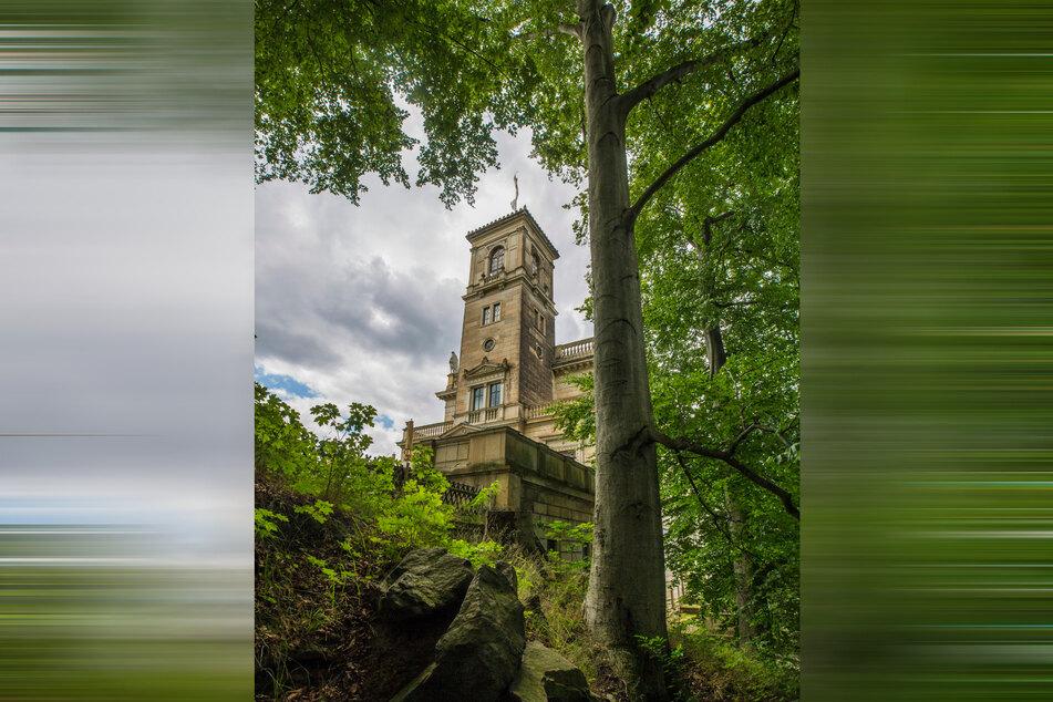 Die höchsten Bäume der Stadt stehen im Park von Schloss Albrechtsberg.