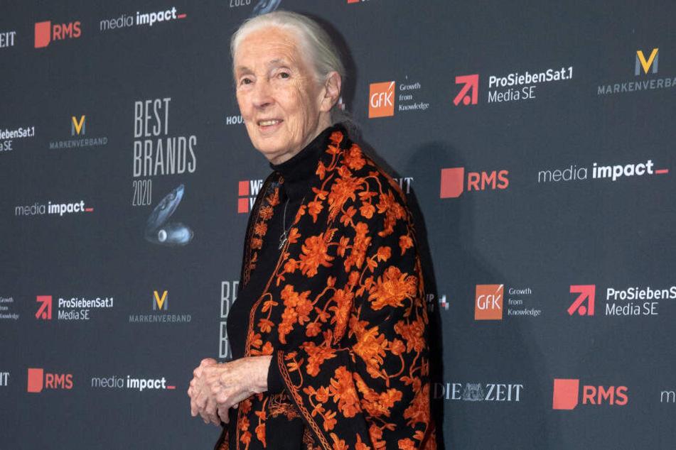 """Jane Goodall, Primatenforscherin aus Großbritannien, nimmt an der Gala """"Best Brands"""" teil."""
