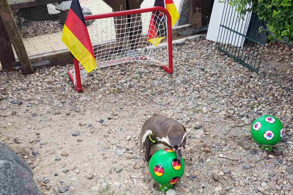 Hier entscheidet sich Flocke erneut für die deutsche Auswahl.