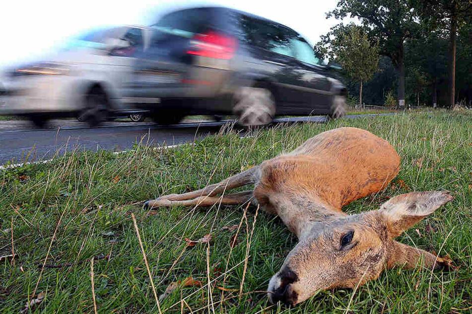 Nach Wildunfällen müssen Autofahrer nicht für Kosten aufkommen, die durch die Beseitigung der Tierkadaver entstehen. (Symbolbild)