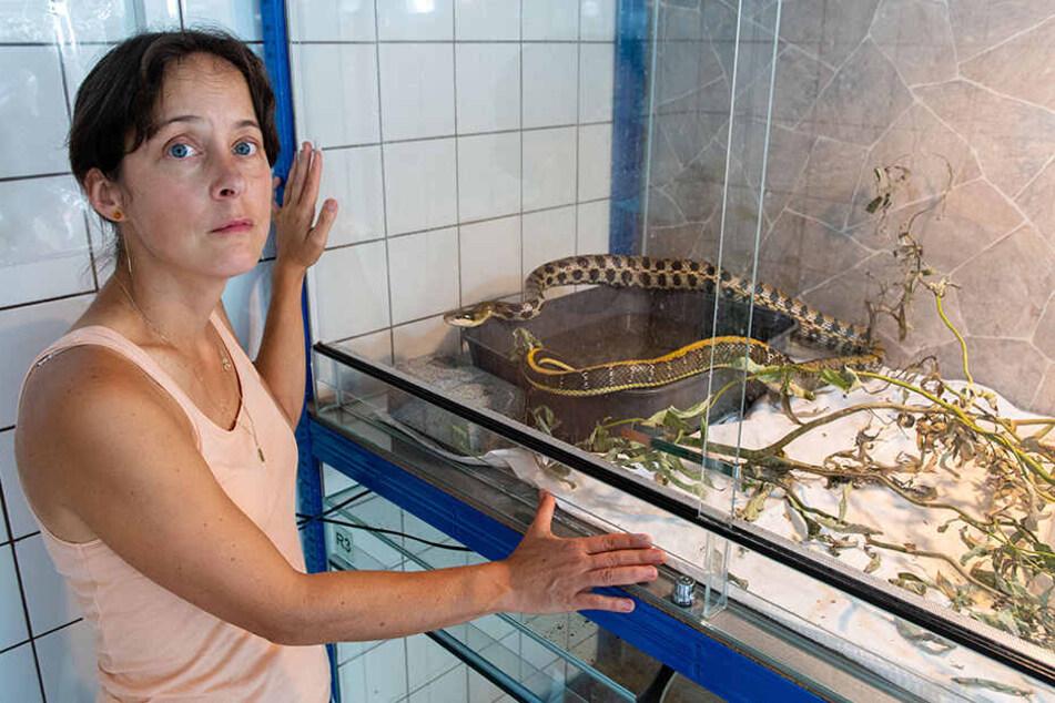 Claudia Ruf (46), Vorsitzende des Tierschutzvereins Zwickau und Umgebung mit dem Schlangen-Neuzugang.
