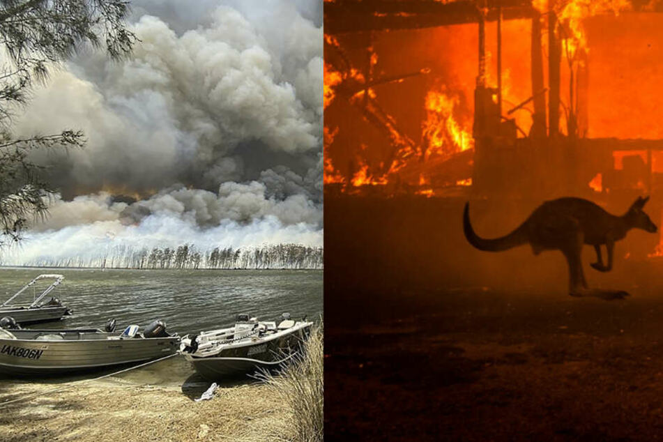 Australien: Haben die Buschbrände schon ganze Tierarten ausgerottet?