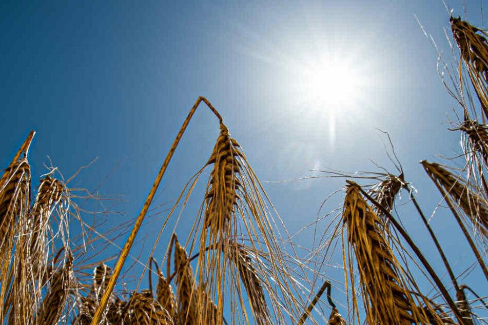 Die anhaltende Hitze der letzten Wochen hat ernsthafte Folgen. (Symbolbild)