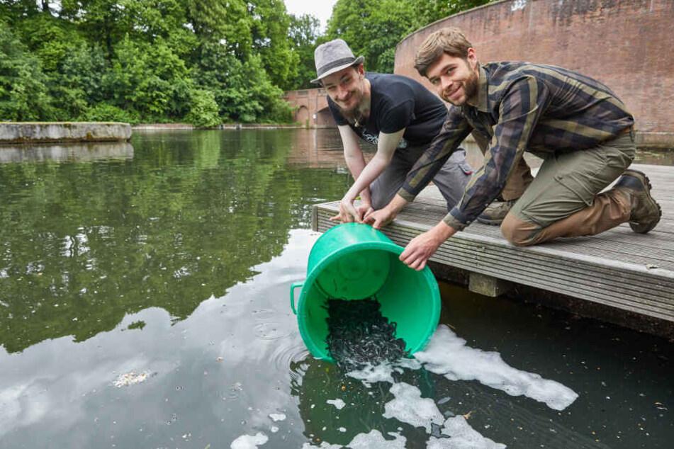 Rüdiger Märker (links) und Robin Giesler vom Angelsport-Verband Hamburg e.V. besetzen den Goldbekkanal mit Jungaalen.